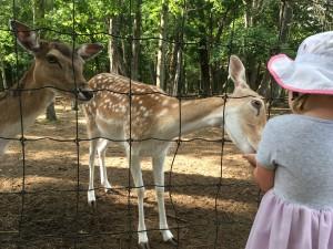 Scarlett at Oak Lawn Farm Zoo